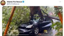 Video shows car impaled by massive fallen oak tree and downed power lines in Georgia