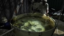 AP PHOTOS: Former shipping container maker uses them to farm