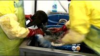 Brown Pelicans Rescued From Oil Spill Cared For In San Pedro