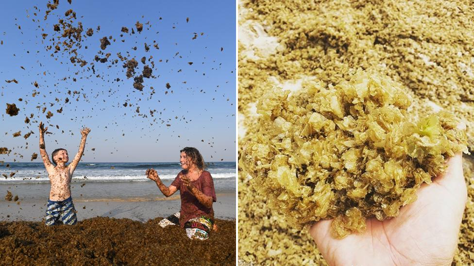 'Like swimming in porridge': Locals baffled by mounds of seaweed on Gold Coast beaches