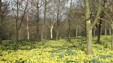 Three gardens to visit this Easter weekend