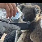 Firefighters Give Water to Mother and Baby Koala on Kangaroo Island, South Australia
