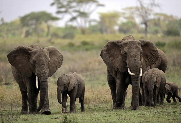 To stop illegal trade in wild animals, we must support justice systems in countries like Kenya and Botswana