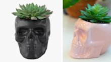 These Sugar Skull Succulents Need to Be Part of Your Halloween Decor