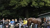 American Pharoah is Belmont Favorite