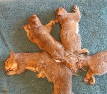 Wisconsin Humane Society Rescues 5 Squirrels With 'Hopelessly Entangled' Tails
