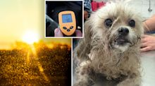 Warning to pet owners as temperatures expected to soar