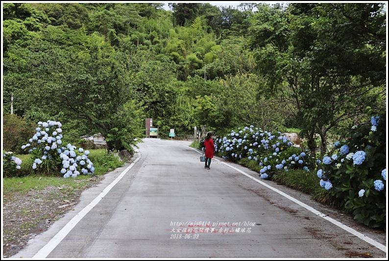 赤柯山繡球花-2018-06-13.jpg