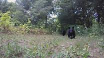 Bears Bat at GoPros