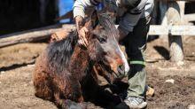 En el país del polo y los gauchos, cineasta argentino revela maltrato en comercio de caballos