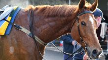 Gailo Chop back home after Perth G1 run
