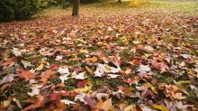 Laub im Garten: Aufsammeln oder liegen lassen?