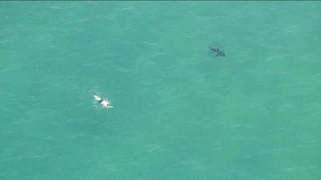 RAW: Swimmer Spotted Off Manhattan Beach Near What Appeared to Be a Shark