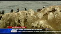 Process to clean up bird droppings in La Jolla begins