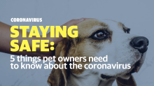 Can my dog get the coronavirus? A vet weighs in