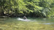 Australian Cattle Dog splashes in the water just like a little kid