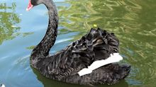 3 ETF Strategies to Stem Losses During Looming 'Black Swan' Event