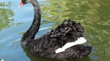 3 ETF Strategies to Stem Losses During Looming 'Black Swan' Event