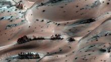 Trees on the Red Planet? Nasa spacecraft captures strange landscape on Mars