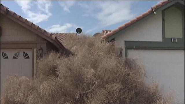 Tumbleweed clean-up begin across Kern County
