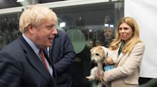 'What a load of c**p!': Carrie Symonds trashes rumours she and Boris Johnson are getting rid of dog Dilyn
