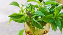 Add these five healthy herbs to your everyday cooking