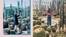 你以為是美國加州秘景嗎?近日 Instagram 上超紅的仙人掌公園,竟然位於深圳!