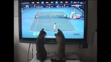 Bengal cats play tennis with Andy Murray