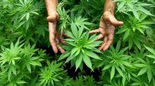 Der Cannabis-Boom erreicht die Wall Street