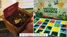 'What the hell?' Woman finds mysterious growth in Woolworths Discovery Garden