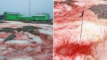 Truth behind why 'blood snow' is blanketing Antarctica