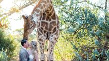 This giraffe is the best wedding photobomber anyone could ask for