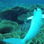MIT Scientists Unveil Robotic Fish to Monitor Marine Life Up Close
