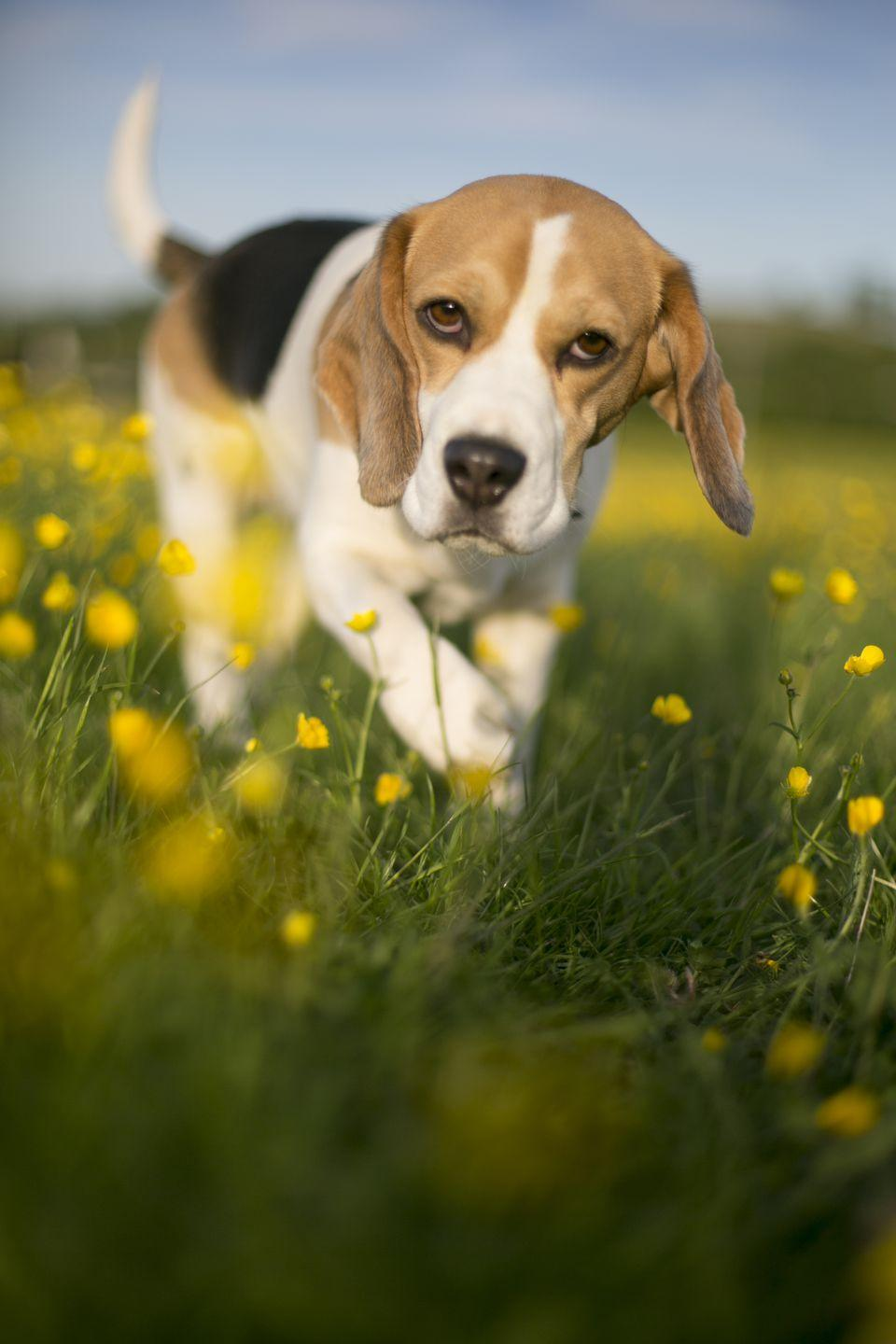 Adorable Dog Breeds You Need in Your Life