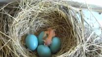 Baby Bird Hatches from Egg