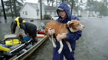 Yahoo News Explains: Why some people leave their pets during a hurricane