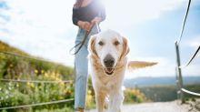 Curare gli animali domestici con farmaci umani, ecco quanto potrà risparmiare una famiglia