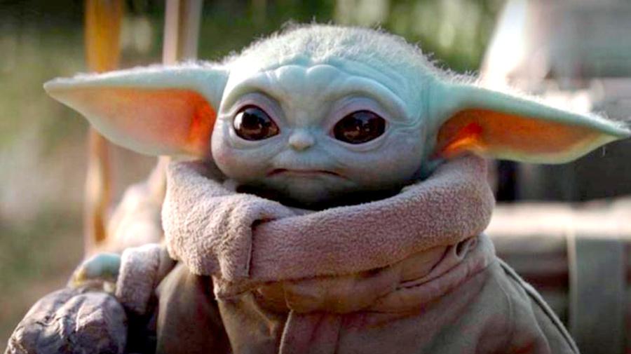 Katze wird wegen ihrer Ähnlichkeit zu Baby Yoda gefeiert