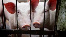 Tierschutz: Aldi, Lidl, Rewe und Co. kommen Verantwortung nicht nach