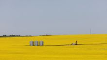 Canada expects canola harvest to be smallest in four years on reduced plantings