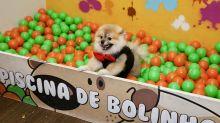 """Roberta Miranda faz festança para cachorrinho Severino: """"É meu filho"""""""