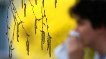 Allergie aux pollens : la quasi-totalité de la France est concernée