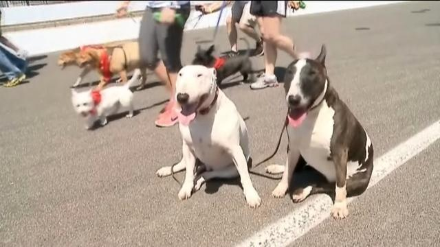 Indianapolis Motor Speedway hosts 11th annual Mutt Strutt