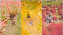 【相集】日本攝影師「祖母與柴犬」 秋櫻到紅葉超有愛
