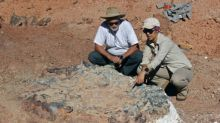 Forscher in Argentinien entdecken 220 Millionen Jahre alte Fossilien