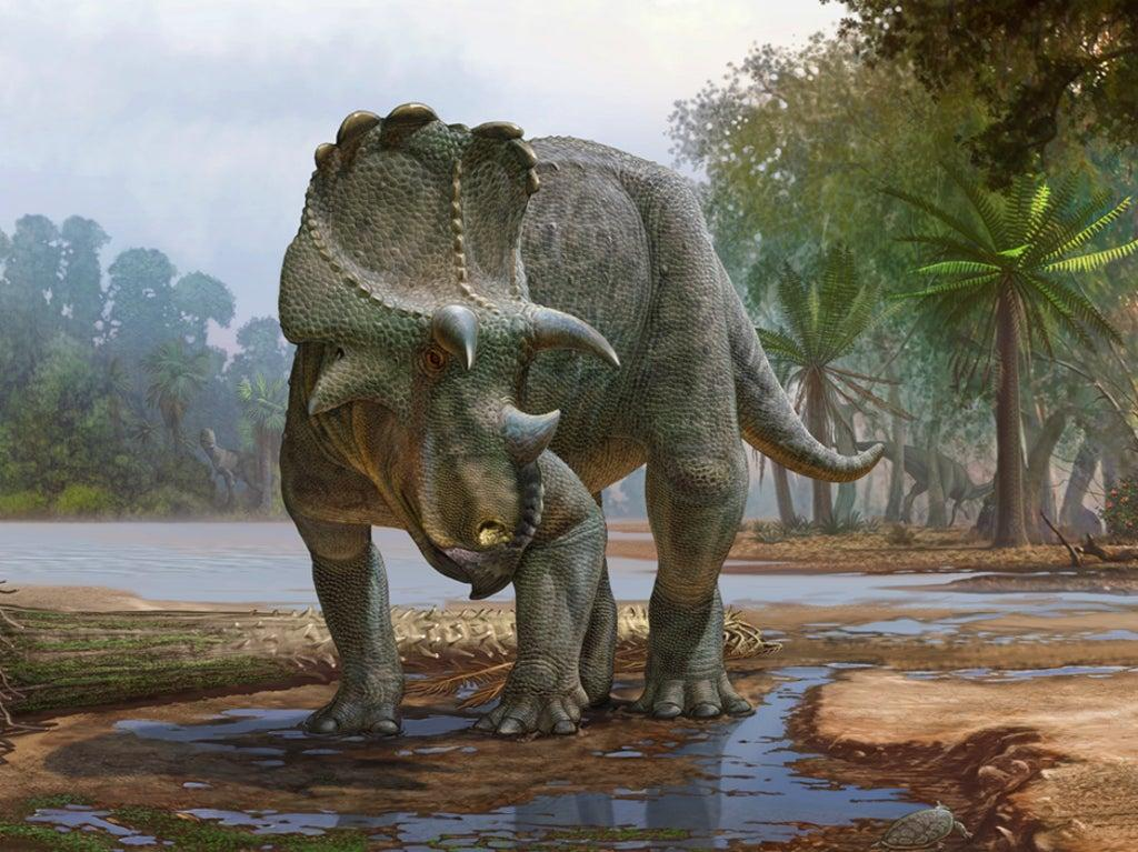 New horned dinosaur found in US was ancestor to triceratops, paleontologists say
