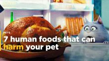 7 human foods that can harm your pets