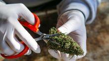 Why Aurora Cannabis Fell 12.9% in June