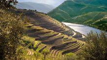 Grape harvest season is here: 10 wine holidays to celebrate
