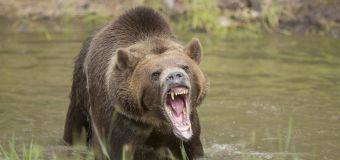 Grizzly mauling kills guide near Yellowstone